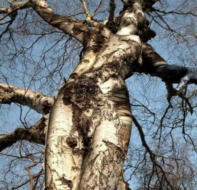 Ecologia del profondo: dove finisce l'ambiente e dove comincio io?
